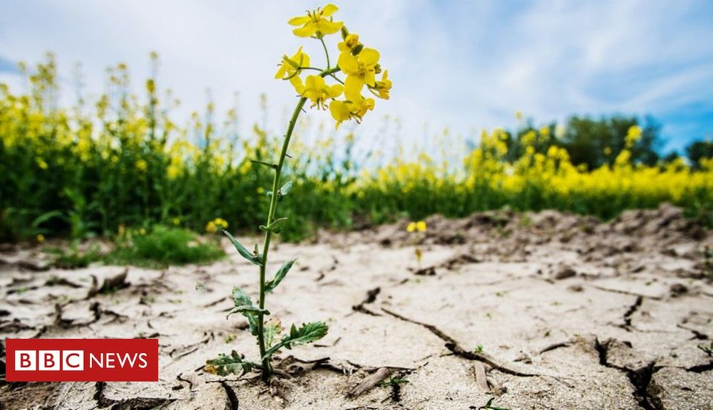 Positive people Climate change: 'Clear and unequivocal' emergency, say scientists.