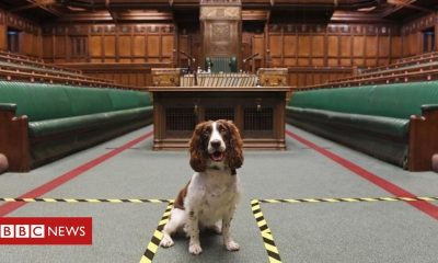 Animals 'Heroic' dog given Speaker's chair during Commons explosives sweep